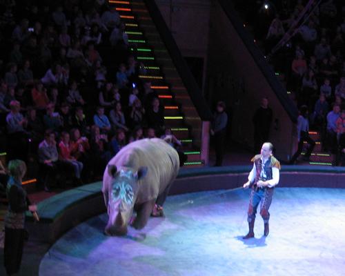 белый носорог в цирке